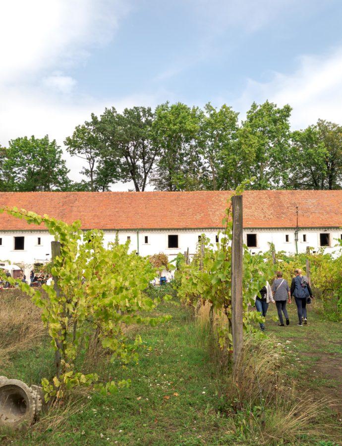 Bzowa Ostoja i Dobro Krasków – oaza pod Wrocławiem