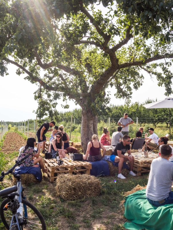 Żar wino w winnicy - plenerowa kuchnia z pysznym winem i mięsiwem schab piotr andruszko