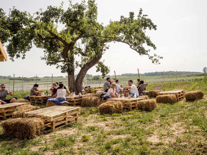 Żar wino w winnicy - plenerowa kuchnia z pysznym winem i mięsiwem