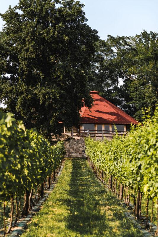 Winnica Łukasz - pomysł na wycieczkę w Lubuskiem