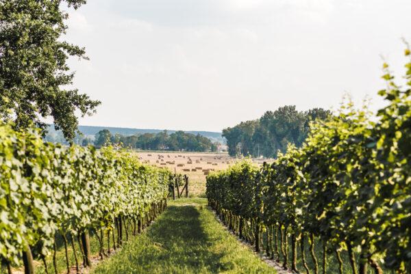 Winnica Łukasz - przystanek na Lubuskim Szlaku Wina i Miodu