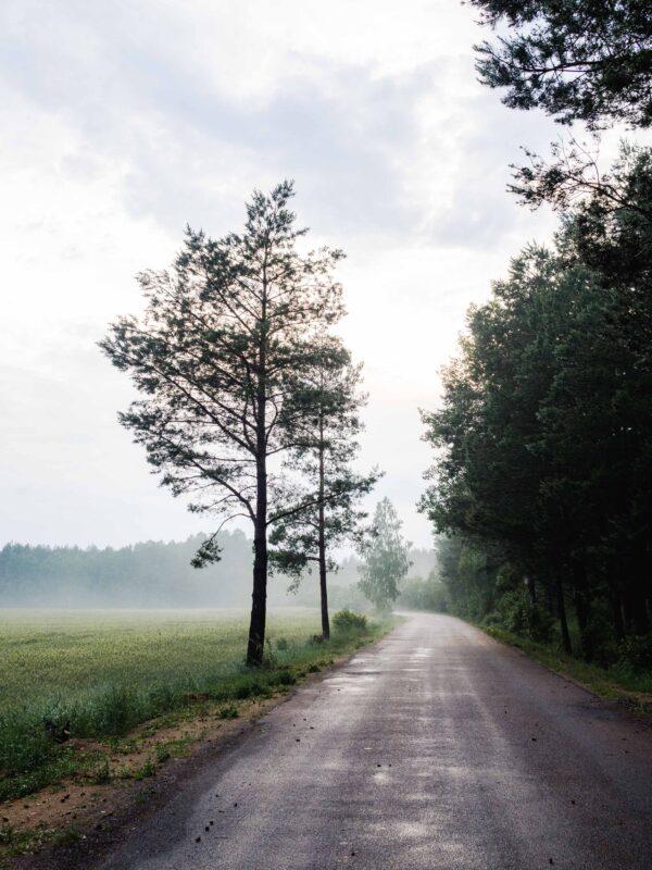 Co zobaczyć na Podlasiu - podlaska mgła
