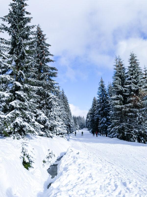 Góry Izerskie zimą Jakuszyce biegówki