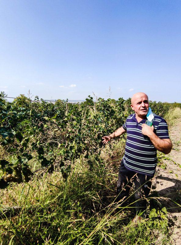 Winnica w Sighnaghi